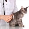 Ветеринарные клиники в Ялуторовске